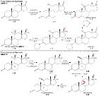 Fluoxymesterone Synthesis