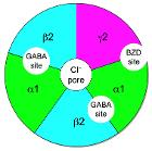 GABAA-receptor-protein-example