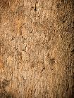 Apple box bark