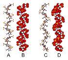 Heparin-3D-structures