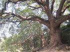 Camphor Grove Sha Tau Kok