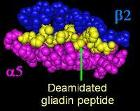 DQa2b5 da gliadin