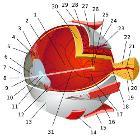 Eye-diagram no circles border 1