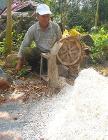 Cassava being grated