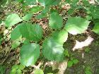 Poison Ivy in Perrot State Park