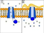 CFTR Protein Panels