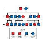 Autosomal Dominant Pedigree Chart