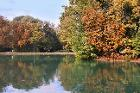 10 Pest damage - horse-chestnut leaf miner (Cameraria ohridella) in Parma, Italy